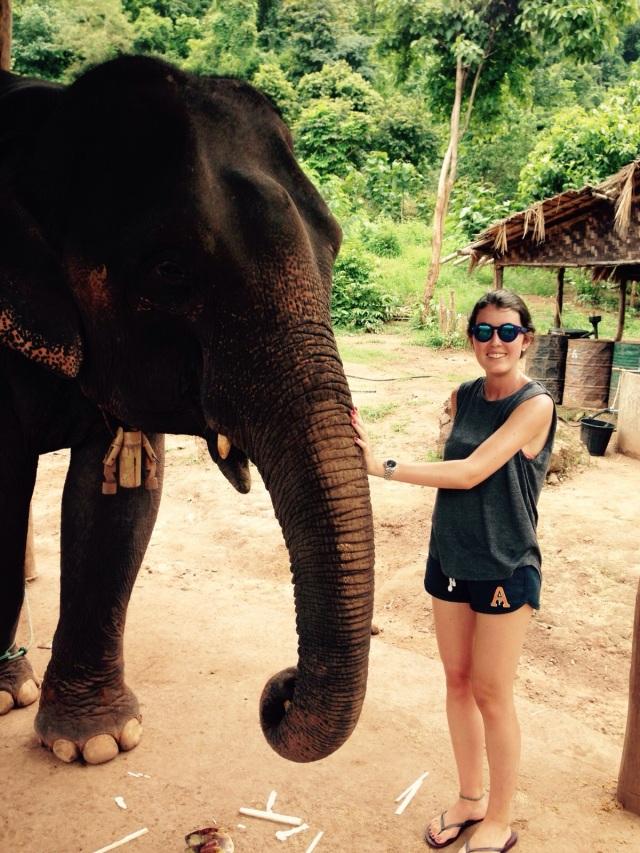 Campamento de rescate de elefantes, Kalaw / Elephant Rescue Camp, Kalaw