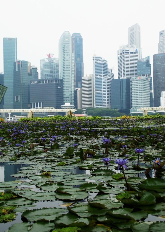Nenúfares y rascacielos / Water lilies and skyscrapers