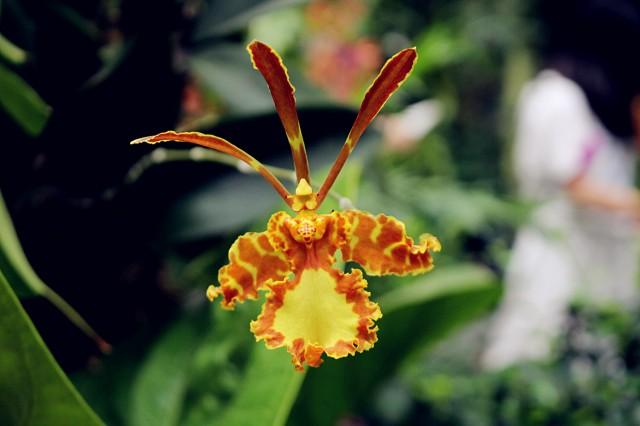 Jardín de Orquídeas / Orchid Garden